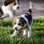 Long Island Puppy Parties: Making Your New Puppy Socialize