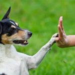 What To Look For In A Residential Dog Training Professional