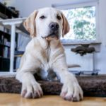 How Can You Help Your Dog Deal with Separation Anxiety?