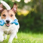 What To Do When Buying Dog Products